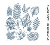 hand drawn plant and flower... | Shutterstock .eps vector #620350949