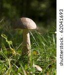 Mushroom in the forest in autumn - stock photo