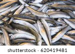 background of sea fish close up ... | Shutterstock . vector #620419481