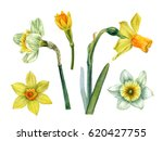 watercolor hand painted flowers.... | Shutterstock . vector #620427755