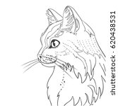 line cat for coloring book.   Shutterstock .eps vector #620438531