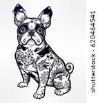 Stock vector vintage style beautiful bulldog or pug dog with body decorated in flash art tattoos character 620464541