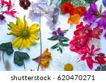beautiful mixed colorful...   Shutterstock . vector #620470271