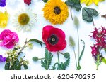 beautiful mixed colorful...   Shutterstock . vector #620470295