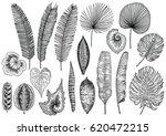 tropical leaf illustration ... | Shutterstock .eps vector #620472215