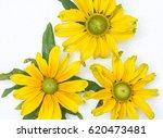 edible flowers   food flowers   ...   Shutterstock . vector #620473481