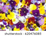Stock photo edible flowers food flowers colorful viola flowers isolated on white background 620476085