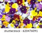 Edible Flowers   Food Flowers ...