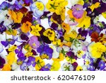 edible flowers   food flowers   ... | Shutterstock . vector #620476109