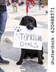 Cute Dog Holding A Banner In...