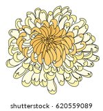 hand drawn chrysanthemum for... | Shutterstock .eps vector #620559089