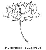 hand drawn lotus flower for...   Shutterstock .eps vector #620559695