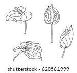hand drawn flamingo flower...   Shutterstock .eps vector #620561999