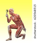 male muscle anatomy searching... | Shutterstock . vector #620568515