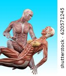 male muscle anatomy takes care... | Shutterstock . vector #620571245
