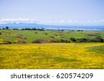 goldfields wildflowers blooming ... | Shutterstock . vector #620574209