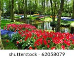 Colorful Flowers And Blossom I...