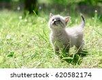 Stock photo kitten on grass close up 620582174