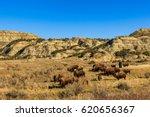 Buffalo in Theodore Roosevelt National Park, North Dakota