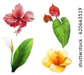tropical flowers bloom set | Shutterstock . vector #620663519