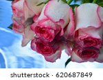 beautiful roses reflected in... | Shutterstock . vector #620687849