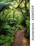 Walking Trail In New Zealand...