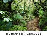 walking trail in new zealand... | Shutterstock . vector #62069311