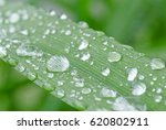 close up of rain drops on blade | Shutterstock . vector #620802911