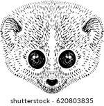 loris monkey vector illustration | Shutterstock .eps vector #620803835