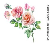 Stock photo watercolor roses branch 620853059