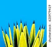 aloe wild. creative design.... | Shutterstock . vector #620979419