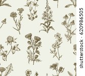 sketches of the wildflowers | Shutterstock .eps vector #620986505