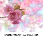 sakura. cherry blossoms japan... | Shutterstock . vector #621061685