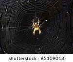 The Big Beautiful Spider...