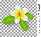 white and yellow plumeria... | Shutterstock .eps vector #621126449