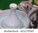 american short hair cat thirsty ... | Shutterstock . vector #621170567