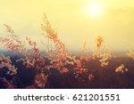 flower grass with sunlight in... | Shutterstock . vector #621201551