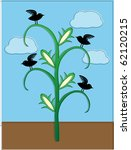 crows sitting on cornstalk