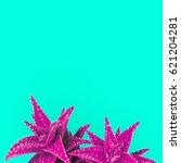 aloe fuchsia minimal creative... | Shutterstock . vector #621204281