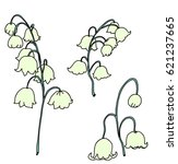 hand drawn lily of the volley...   Shutterstock .eps vector #621237665