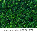 shrubs and trees pittosporum in ... | Shutterstock . vector #621241979