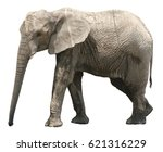 african elephant on white... | Shutterstock . vector #621316229