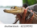 Crocodile In Hand