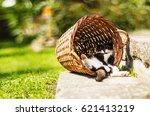 Tired Kitten Sleeping In Shado...