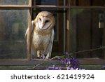 owl | Shutterstock . vector #621419924