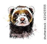 colored hand sketch head ferret.... | Shutterstock .eps vector #621425555