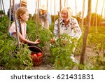 family farmers working with... | Shutterstock . vector #621431831