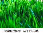 green grass | Shutterstock . vector #621443885