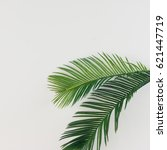 tropical palm leaves on bright... | Shutterstock . vector #621447719