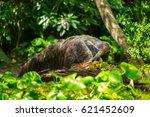 giant anteater | Shutterstock . vector #621452609